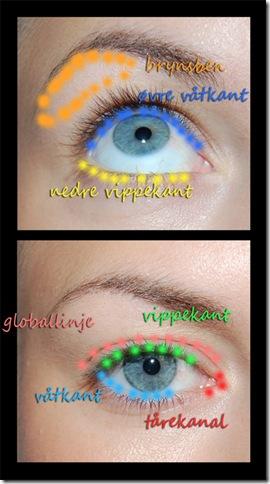 øyeanatomi